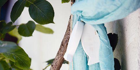 Branch, Twig, Aqua, Teal, Turquoise, Plant stem,