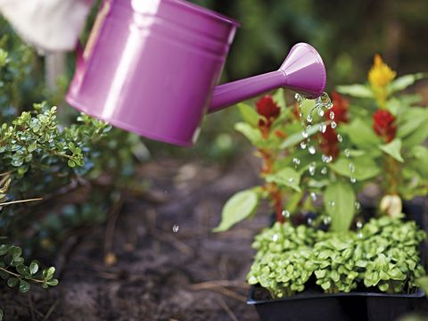 Watering can, Flowerpot, Plant, Flower, Garden, Annual plant, Herb,