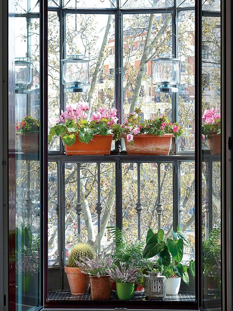 Flowerpot, Plant, Flower, Glass, Fixture, Botany, Houseplant, Interior design, Iron, Daylighting,
