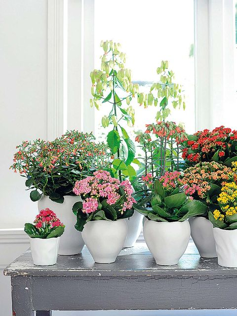 Flowerpot, Plant, Flower, Interior design, Petal, Vase, Flower Arranging, Houseplant, Floristry, Shrub,