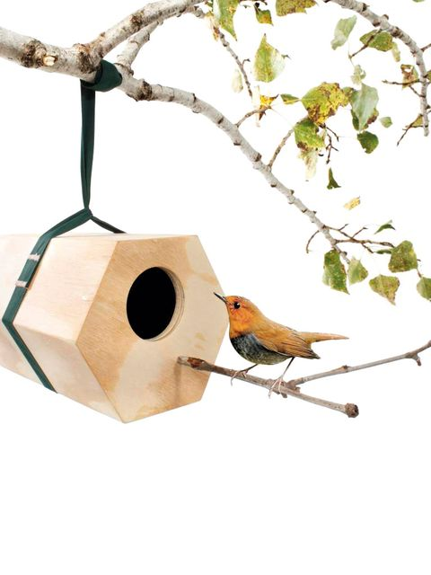 Birdhouse, Birdhouse, Bird supply, Bird, Branch, Bird feeder, Twig, Chickadee, Perching bird, Bird toy,
