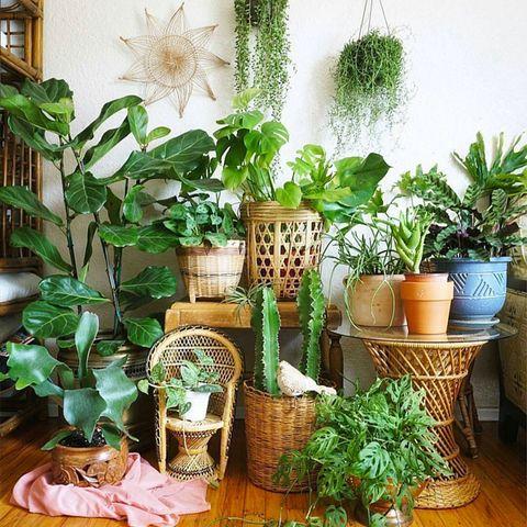 Flowerpot, Interior design, Botany, Flowering plant, Terrestrial plant, Houseplant, Basket, Wicker, Vase, Plant stem,