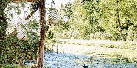 Bottle, Garden, Home accessories, Basket, Wicker, Trunk, Picnic basket, Picnic, Storage basket, Yard,