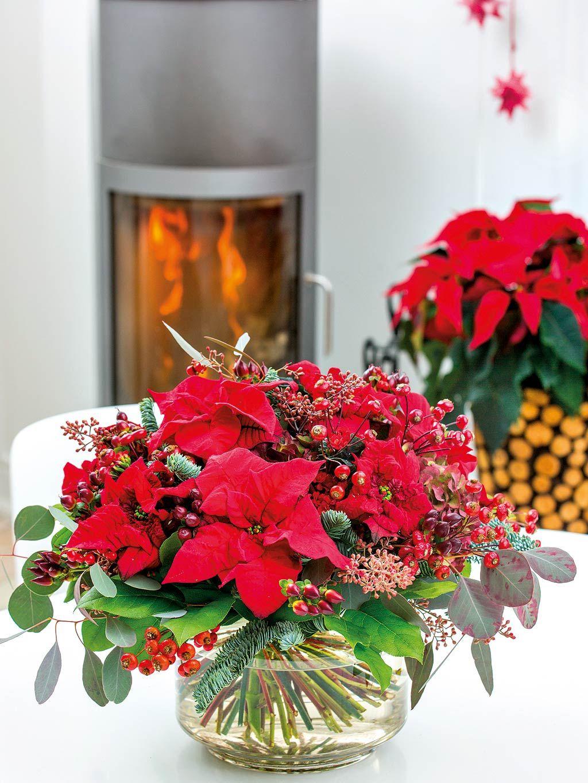 Verde fiesta: Decora la Navidad con flores y plantas