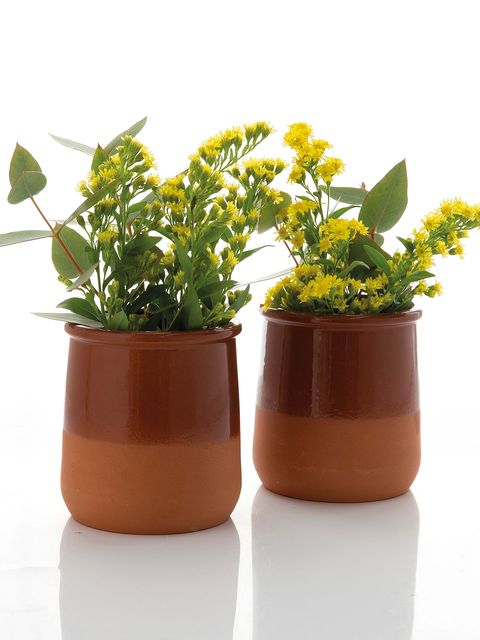 Flowerpot, Flower, Plant, Houseplant, Yellow, Herb, Grass, Flowering plant, Interior design, Hypericum,