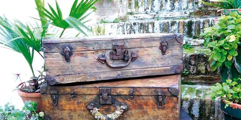 Flowerpot, Houseplant, Baggage, Wood stain, Trunk, Herb, Water feature, Antique, Box,