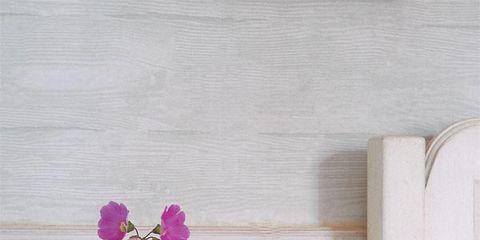 Petal, Flower, Wall, Purple, Violet, Flowering plant, Shrub, Annual plant, Rectangle, Still life photography,
