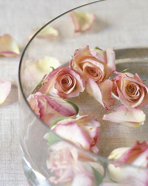 Pink, Garden roses, Cut flowers, Flower, Rose, Petal, Flower Arranging, Floral design, Rose family, Plant,