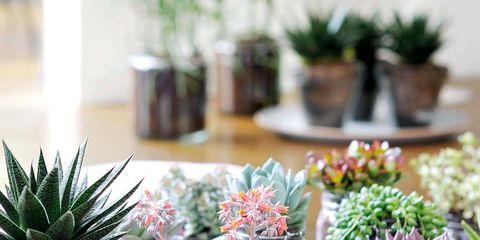 Flowerpot, Serveware, Flower, Interior design, Terrestrial plant, Bouquet, Houseplant, Flower Arranging, Dishware, Centrepiece,