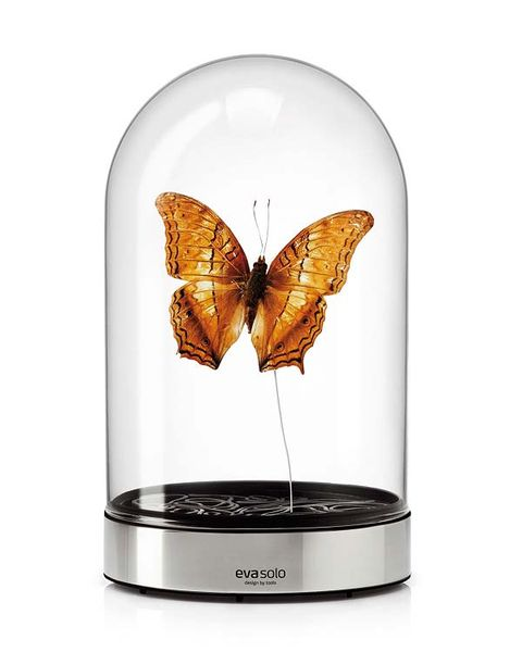 Invertebrate, Arthropod, Insect, Pollinator, Butterfly, Amber, Moths and butterflies, Wing, Silver, Moth,
