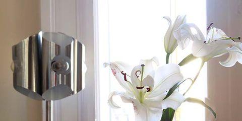 Glass, Drinkware, Serveware, Petal, Interior design, Artifact, Tableware, Barware, Vase, Cut flowers,