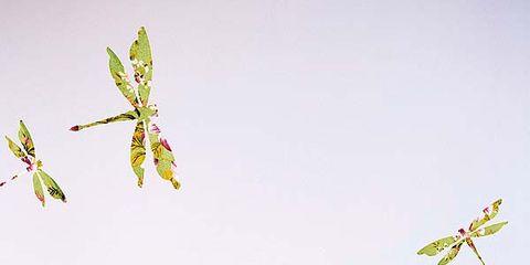 Leaf, Pollinator, Invertebrate, Arthropod, Insect, Botany, Wing, Art, Serveware, Dishware,