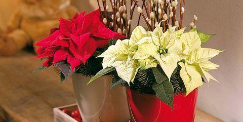 Detalles para decorar la casa en navidad - Detalles de decoracion para casa ...