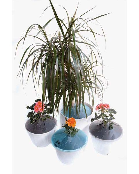 Flowerpot, Plant, Flower, Interior design, Botany, Houseplant, Terrestrial plant, Flowering plant, Vase, Plant stem,
