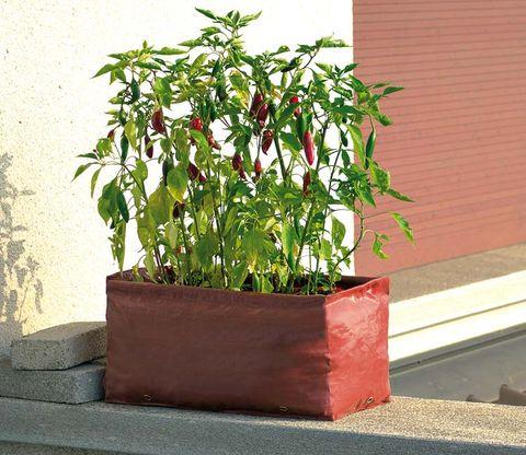 maceta con plantas de pimiento