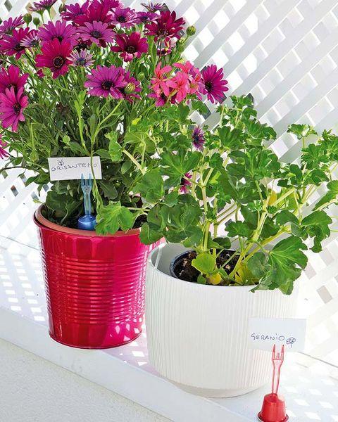 Petal, Plant, Flowerpot, Flower, Purple, Magenta, Flowering plant, Interior design, Annual plant, Daisy family,