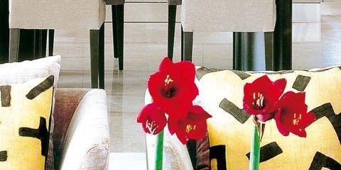 Bottle, Glass bottle, Petal, Carmine, Cut flowers, Flower Arranging, Interior design, Floristry, Artifact, Artificial flower,