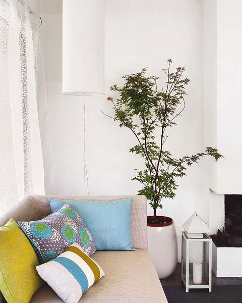 Room, Interior design, Branch, Textile, Wall, Flowerpot, Interior design, Twig, Home, Fixture,