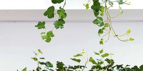 Leaf, Design, Paint, Annual plant, Plant stem, Coquelicot,