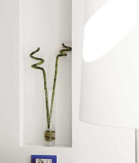 Wall, Botany, Plant stem,