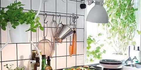 Flowerpot, Kitchen stove, Cuisine, Grey, Kitchen appliance, Kitchen, Light fixture, Houseplant, Interior design, Kitchen appliance accessory,