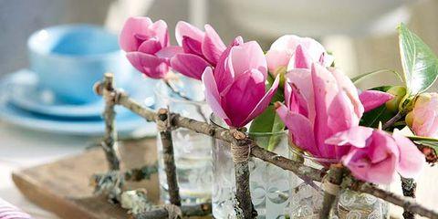 Petal, Branch, Serveware, Dishware, Flower, Pink, Flowering plant, Magenta, Botany, Spring,