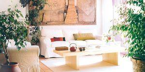 Salón decorado con plantas: ficus