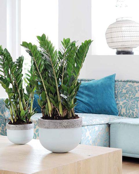 Plant, Green, Flowerpot, Leaf, Wall, Interior design, Couch, Botany, Aqua, Terrestrial plant,