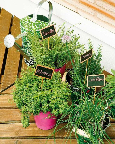 Flowerpot, Lavender, Herb, Annual plant, Houseplant,