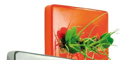 Leaf, Botany, Flowering plant, Rectangle, Herb, Plant stem, Still life photography, Herbal,