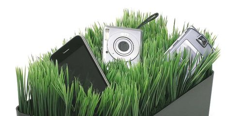 Grass, Green, Grass family, Wheatgrass, Ingredient,