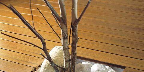 Wood, Hardwood, Twig, Wood stain, Natural material, Wood flooring, Lumber, Plywood, Silver, Plank,