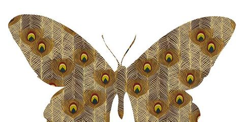 Invertebrate, Organism, Arthropod, Insect, Brown, Yellow, Pollinator, Butterfly, Wing, Line,