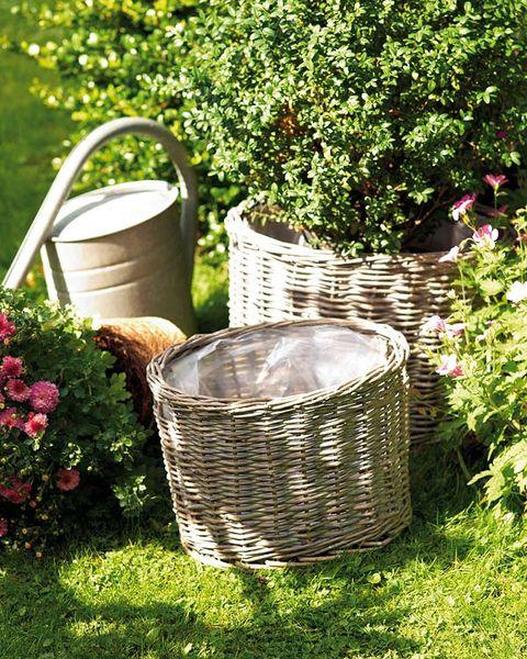 Plant, Shrub, Garden, Basket, Backyard, Annual plant, Wicker, Home accessories, Herb, Laundry basket,