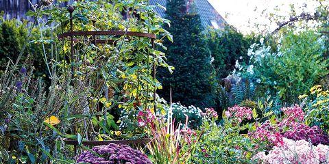 Shrub, Garden, Plant community, Purple, Groundcover, Petal, Botany, Home fencing, Landscaping, Yard,
