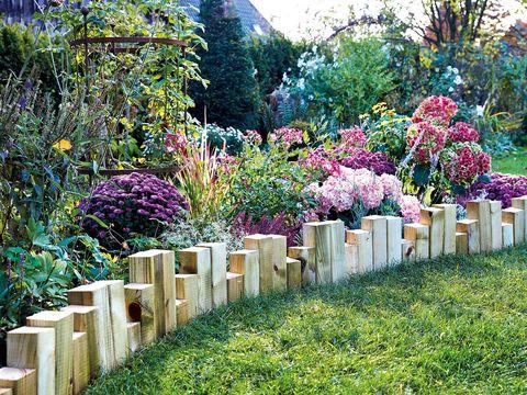 Shrub, Plant, Garden, Flower, Plant community, Purple, Petal, Groundcover, Lavender, Magenta,