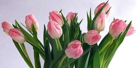 Petal, Flower, Pink, Cut flowers, Floristry, Flowering plant, Flower Arranging, Vase, Artifact, Magenta,