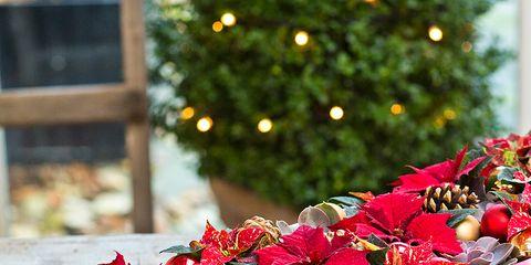 Petal, Flower, Red, Flowerpot, Interior design, Magenta, Carmine, Flower Arranging, Maroon, Floristry,