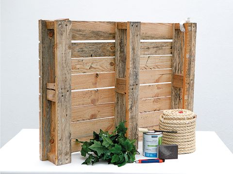 Wood, Book, Furniture, Plant, Plywood, Hardwood,