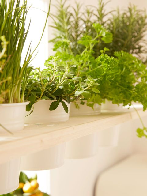 Plant, Herb, Flower, Flowerpot, Houseplant, Leaf, Grass, Room, Fines herbes, Annual plant,
