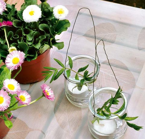 Petal, Flower, Flowering plant, Serveware, Flowerpot, Botany, Annual plant, Daisy family, Houseplant, Marguerite daisy,