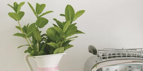 Pink, Lavender, Eye glass accessory, Vase, Rectangle, Herb, Artifact, Flowerpot, Annual plant, Plastic,