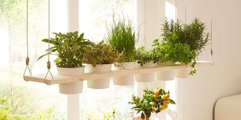 Yellow, Room, Brunch, Interior design, Houseplant, Kitchen, Herb, Plant, Flowerpot, Shelf,