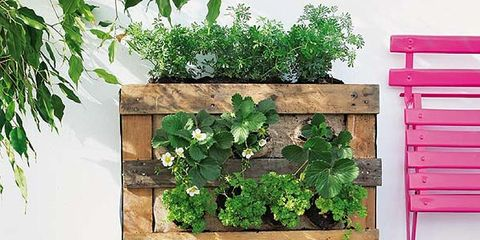 Wood, Leaf, Ingredient, Produce, Natural foods, Fruit, Hardwood, Whole food, Rectangle, Food group,