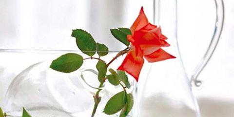Glass, Fluid, Leaf, Flower, Liquid, Drinkware, Petal, Botany, Flowering plant, Transparent material,
