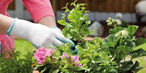 Flowerpot, Plant, Flower, Shrub, Houseplant, Garden, Interior design, Annual plant, Groundcover, Herb,