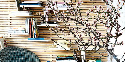 Publication, Book, Book cover, Twig, Shelving, Collection, Shelf,
