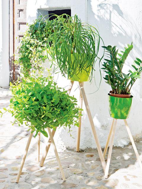 Green, Botany, Flowerpot, Terrestrial plant, Plant stem, Houseplant, Vascular plant, Annual plant, Herb,