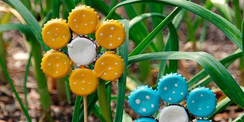 Blue, Botany, Terrestrial plant, Grass family, Spring, Plant stem, Circle, Fungus,