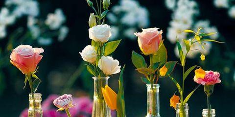 Glass, Bottle, Glass bottle, Drinkware, Barware, Petal, Flower, Floristry, Artifact, Cut flowers,